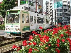 東京豊島区大塚の「大塚バラ祭り」で
